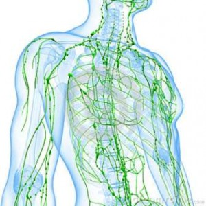 transparent-lymphatic-system-man-26202845